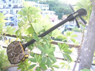 Okinawan sanshin